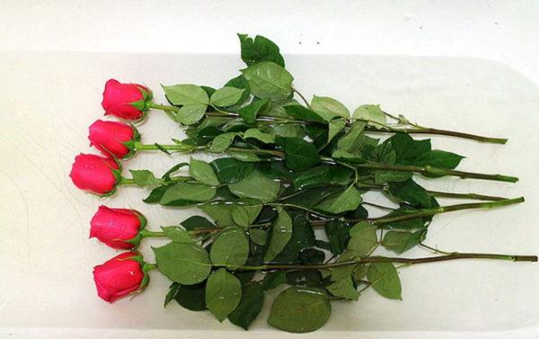 сохранить розы дольше